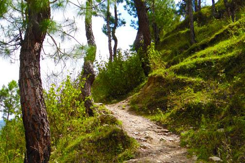 Trekking near The Calm Cottages Nathuakhan 14
