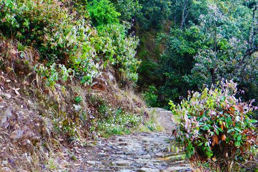 Trekking near The Calm Cottages Nathuakhan 5